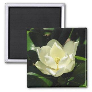 Magnolia meridional imán de frigorifico