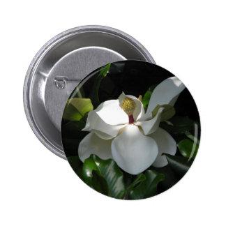 Magnolia meridional pin redondo 5 cm
