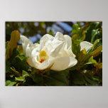 Magnolia meridional que florece en el poster de la