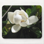 Magnolia meridional tapetes de raton