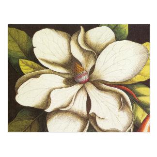 magnolia moderna del vintage tarjeta postal