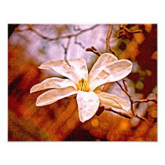 Magnolia Mood Photo Print