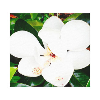 Magnolia on Canvas