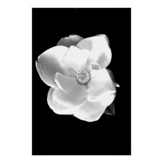 Magnolia Impresiones
