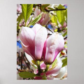 Magnolia pair poster