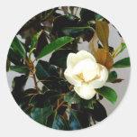 Magnolia Pegatina Redonda