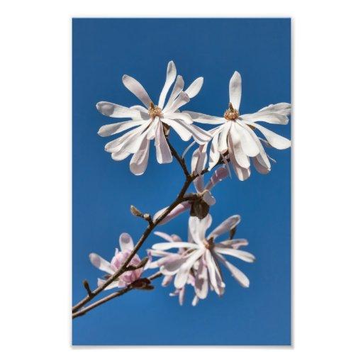 Magnolia - Photo Print