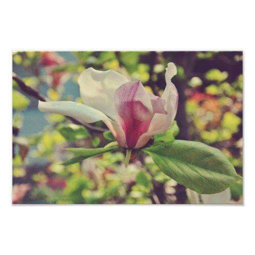 Magnolia Art Photo