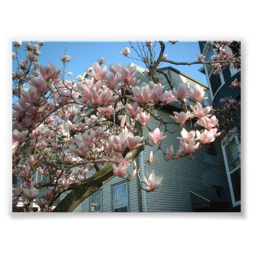 Magnolia Photo Art