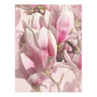 Magnolia photographed by Tutti Postcard