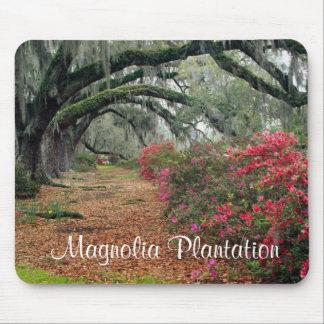 Magnolia Plantation / Charleston SC Mousepad