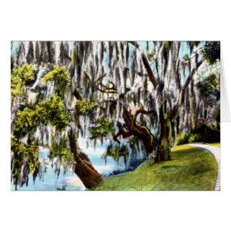 Magnolia Plantation Garden Charleston South Caroli Card