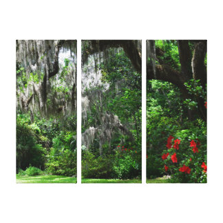 Magnolia Plantation Rear Walkway Triptych Canvas Print
