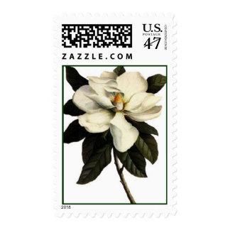 Magnolia - Postage