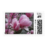 Magnolia Postage Stamp