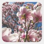 Magnolia rosada floreciente (Tulpenbaum) Pegatina Cuadrada