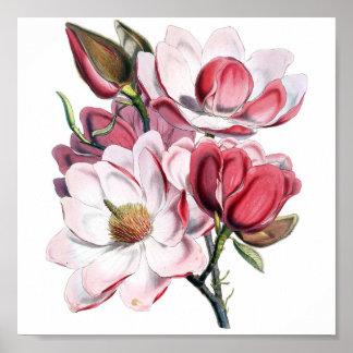 Magnolia rosada póster