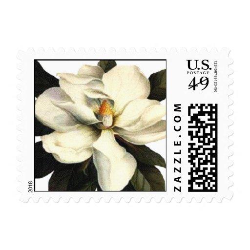 Magnolia - sello