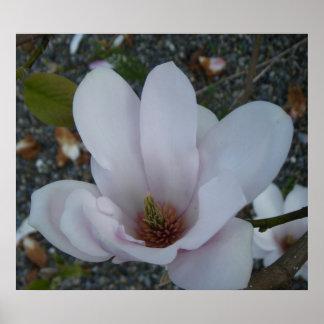 Magnolia Serene~Print~ Posters
