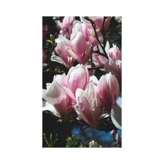 Magnolia - Spring - Floral Photography - Canvas 5
