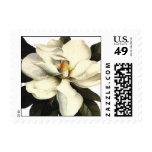 Magnolia - Stamp
