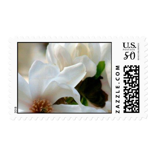 Magnolia Stellata Event And Wedding Stamps Medium