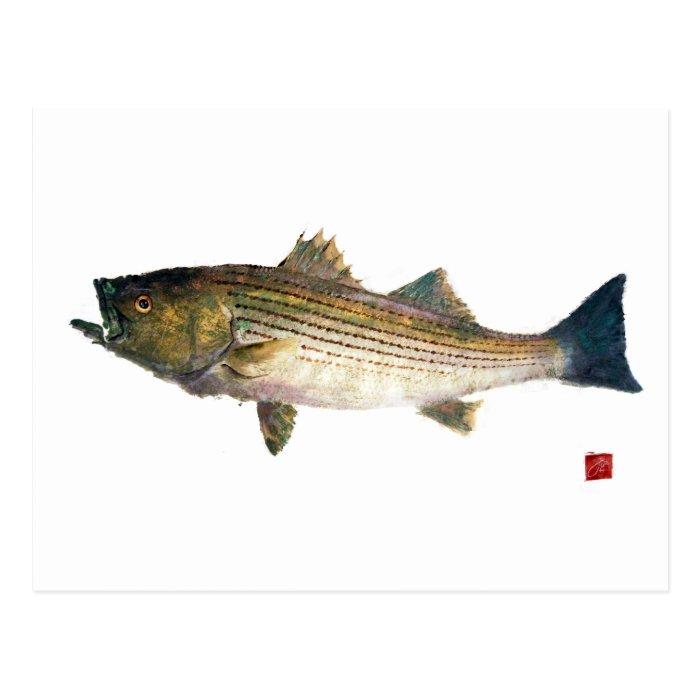 Magnolia Striped Bass Postcard