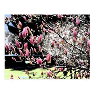 Magnolia Sumi Postcard