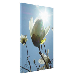 Magnolia sun Gloss Stretched Canvas Print