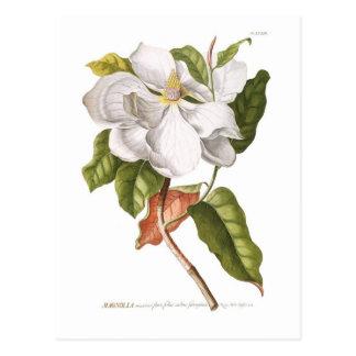 Magnolia. Postal