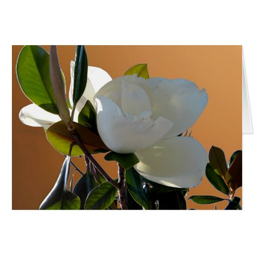 Magnolia Tarjetón