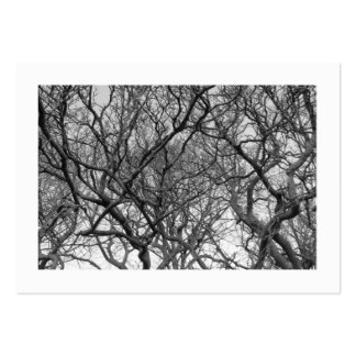 Magnolia Tree Branches B&W (Bordered) Large Business Cards (Pack Of 100)