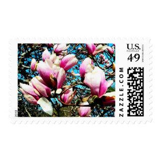 Magnolia Tree Closeup Postage