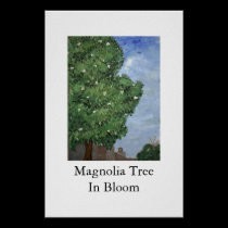 Magnolia Tree In Bloom posters