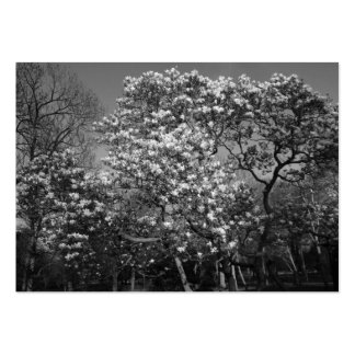 Magnolia Tree in Blossom (B&W) Large Business Cards (Pack Of 100)