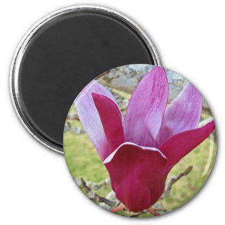 magnolia tree magnet