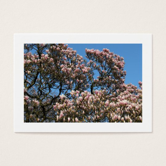 Magnolia Trees in Blossom (Bordered) Business Card