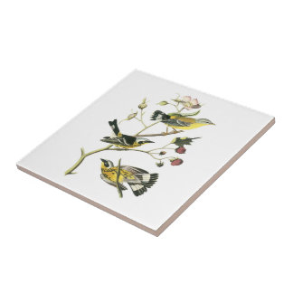 Magnolia Warbler by Audubon Ceramic Tile