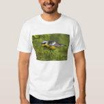 Magnolia Warbler Dendroica magnolia) adult, 2 Tee Shirt