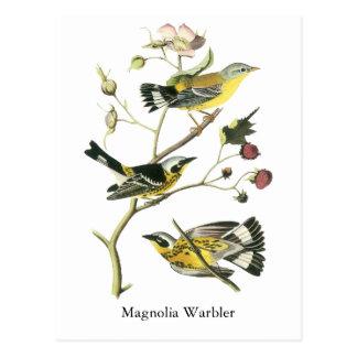Magnolia Warbler, John Audubon Postcards