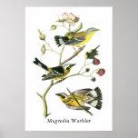 Magnolia Warbler, John Audubon Print