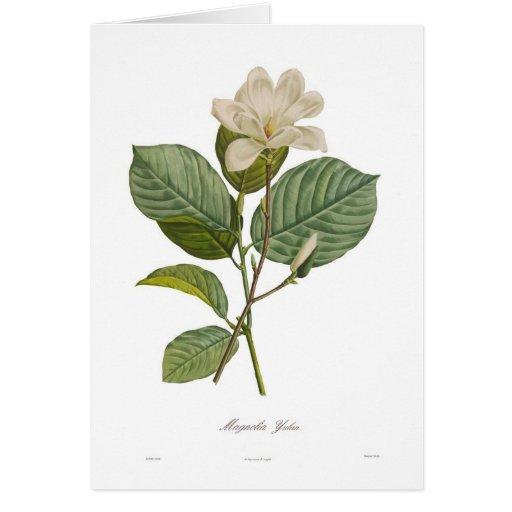 Magnolia yulan card