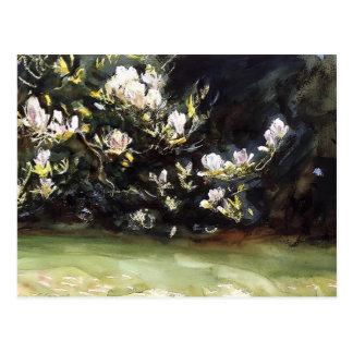 Magnolias by John Singer Sargent Postcards