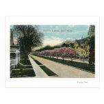 Magnolias de la calle de Oxford en la floración Tarjetas Postales