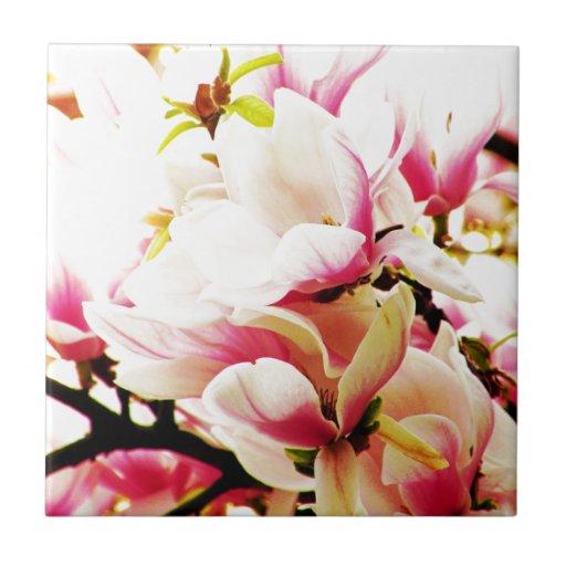 Magnolias en el sol azulejo cuadrado pequeño