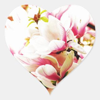 Magnolias en el sol calcomanía de corazón