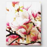 Magnolias en el sol placas de plastico