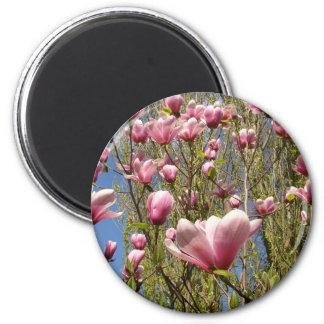 Magnolias en la floración imán redondo 5 cm