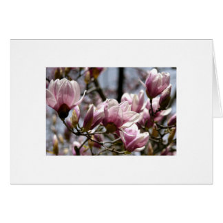 Magnolias in Pittsburgh Stationery Note Card