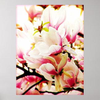 Magnolias in the sun poster